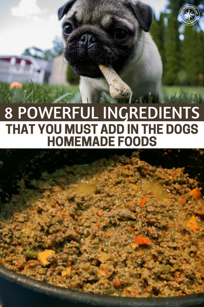 8 Powerful Ingredients That You Must Add in the Dogs Homemade Foods - Like human beings, dogs need a balanced diet. Just because your canine won't resist any tasty food that he comes across doesn't mean that you should forego giving a broad variety of healthy foods. A dog's balanced diet is made of vital nutrients such as carbohydrates, proteins, vitamins, fats, and minerals. They play an essential role in keeping the dog string and healthy.