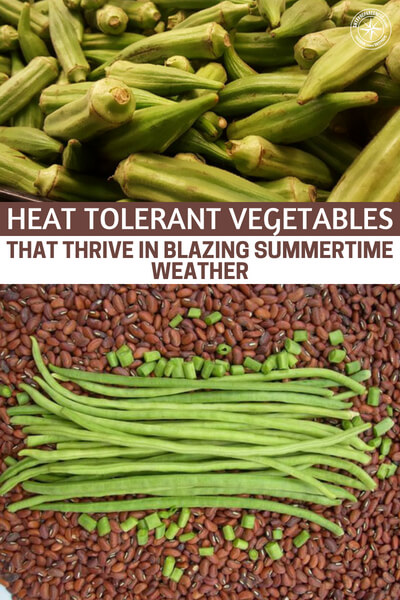 Heat Tolerant Vegetables that Thrive in Blazing Summertime Weather - This article is about growing more heat tolerant vegetables that thrive in the blazing summertime weather. It is a great lesson in seasonal growing and how we can be more thoughtful about our gardens progression throughout the year.