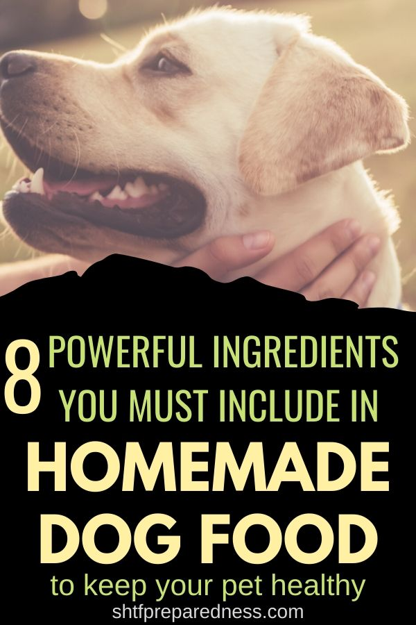 Do you love making homemade dog food? Here are 8 ingredients you must include to keep your dog healthy. #dogfood #homemade #homemadedogfood #healhtydogfood #ilovemydog
