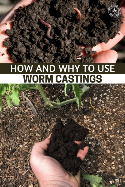 How And Why To Use Worm Castings – The Miracle All-Purpose Fertilizer! - This is an article about how and why to use worm castings. This incredible fertilizer can be had in many ways.
