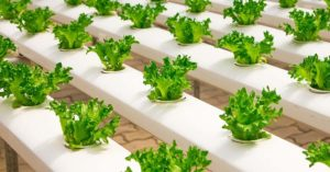 Hydroponics 101: An Introduction to Growing Food Hydroponically - If you could be outfitted to grow food with hydroponics, it could give you more options than just the outside garden. Hydroponics can be used indoors and you could use grow lights to create food for your family.