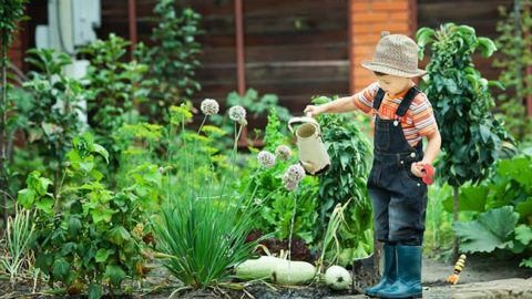 Starting a Gardening and Landscaping Business