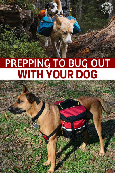 Prepping to Bug Out With Your Dog - If you are one of the people who must bring their dog along you better prepare for them. You have to make sure that you are going have enough food, water and the like to care for your dog. Also, you have to take into account the dogs fitness level. Don't assume your dog is going to be able to hike 10 miles without an issue.
