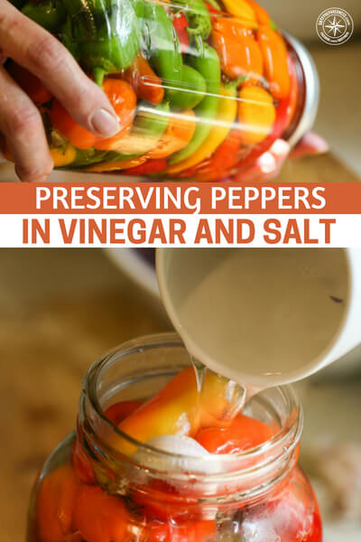 Preserving Peppers in Vinegar and Salt - This article is a great method for preserving peppers in vinegar and salt. Its a very interesting look how to preserve that tremendous harvest you have and be sure that you have peppers when you need them.