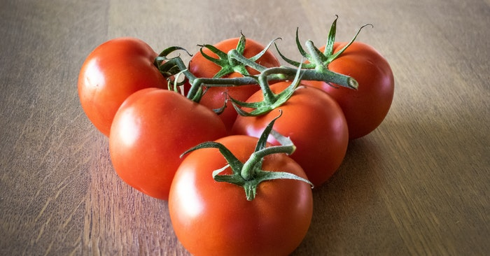Tomato Processing – Canning Freezing Dehydrating - This article goes after three of these methods. You will get a look at what it takes to can, freeze and dehydrate tomatoes. You are going to need to rely on one. Otherwise you will be feeding your compost pile tomatoes.