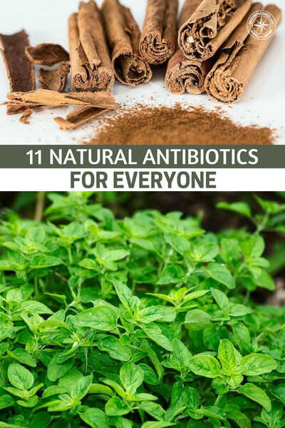 11 Natural Antibiotics for Everyone (and how to use them) - What happens when you get sick in a SHTF scenario and you can not see a doctor? How do you get antibiotics in a time when all the doctors are gone? Worse yet, what if your loved ones need this kind of help? We must have answers and this article will give you some.