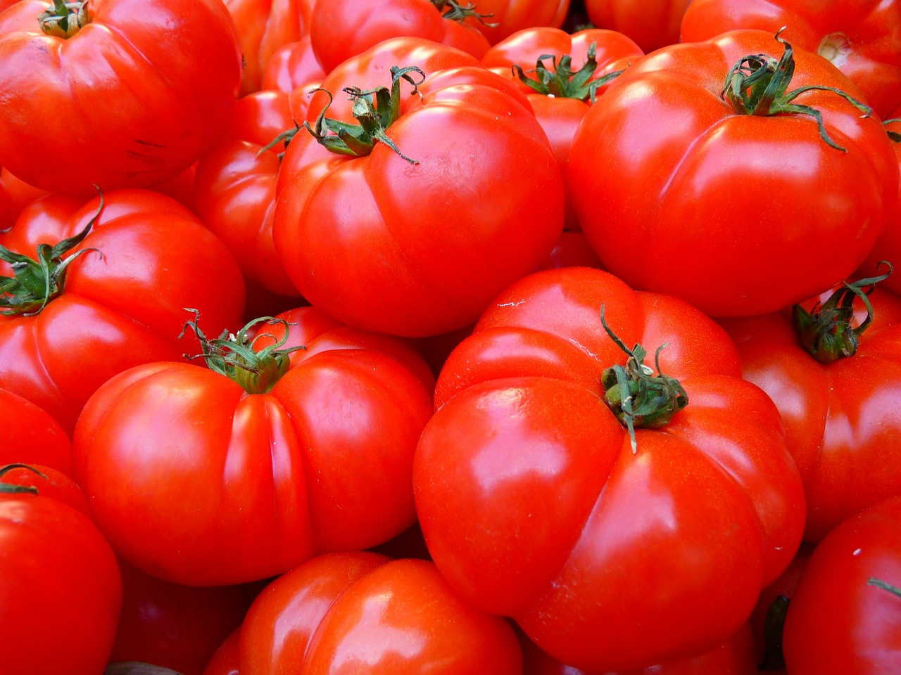 Tips For Canning Tomatoes -- August is in full swing and there are tomatoes everywhere. If you planted a few tomato plants, you might be wondering what you can do with tour bumper crop of tomatoes