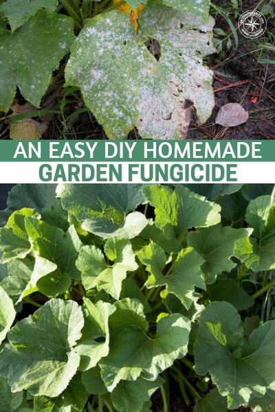 An Easy DIY Homemade Garden Fungicide - This article offers up a quick and easy recipe for making your own homemade fungicide. This could be a garden saver in the near future. You are going to be able to make all sorts of changes to your lifestyle once you have a big old garden producing most of your food.