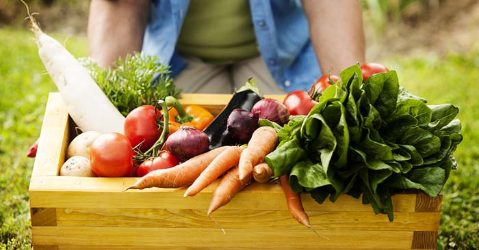 Gardening Tips For Fall To Feed Your Family Homegrown Veggies - This is a great article about tips for the fall garden how you can use it to feed your family. You will find there are a number of solutions to keeping that table full of homegrown foods.
