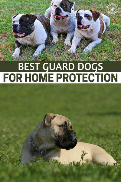 "Best Guard Dogs for Home Protection - There's no ""one dog breed fits all"" because it depends on what you are looking for in a guard dog.  If you have a family, and especially young children, you'll want a dog that is loyal to you and your kids.  It's a huge investment in time, money, and training, and you want to make sure both the dog and the family get along."