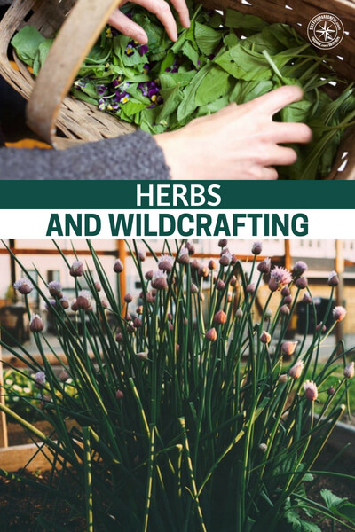 Herbs and Wildcrafting - This is a massive digression on the subject of herbs and wild crafting you will have tough time finding something that was left out in this one. If you are looking for a comprehensive guide on the subject, that is easy to return to, look no further than this guide on herbs and wildcrafting.