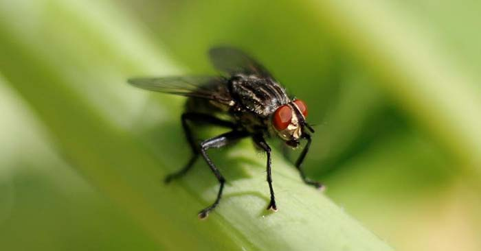 How to Get Rid of Fruit Flies Naturally - Once the waste piles up the pests will come. This article is about dealing with fruit flies. They are a nuisance for us today but they will be much worse in the future. You will struggle to deal with these creatures when things like rats and roaches become prolific.