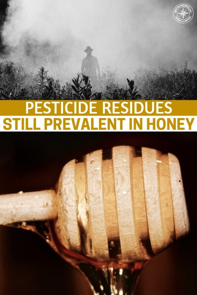 Pesticide Residues Still Prevalent in Honey: Recent Review of Samples From Around the World Reveals Danger to Bees - Will we ever get out from under the thumb of the pesticides? Is there something that is going to feed us, all of us, without the use of pesticides?