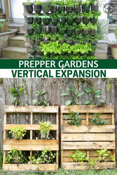 Prepper Gardens – Vertical Expansion - One of the very biggest issues when it comes to gardening is space. You find that people are almost always limited by the expansion of the garden because their are limited in space. This means you are going to struggle to produce more food unless you think outside the box. This article is about vertical expansion.