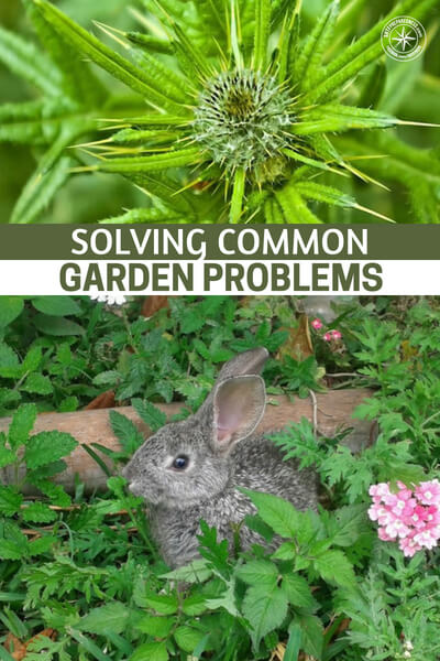 Solving Common Garden Problems - Solving common garden problems is possible if you are prepared and somewhat knowledgeable.