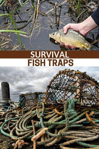 Survival Fish Traps - Well, there is nothing better than a source of protein that is trapped already. A pond is the best example of that type of protein.
