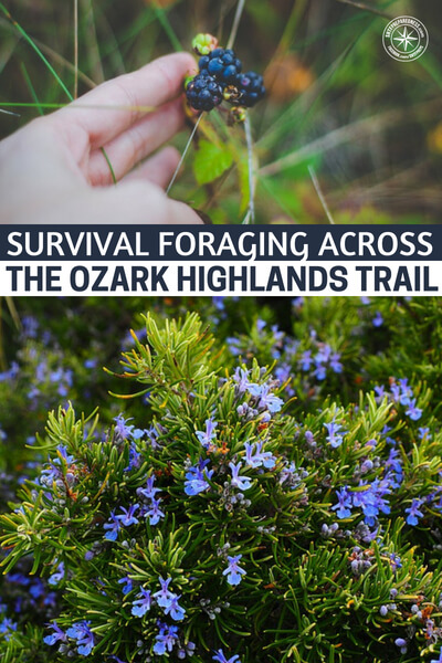 Survival Foraging Across the Ozark Highlands Trail, Part 1: Countdown to Paranoia - The idea of foraging and actually foraging for survival are two different things. When you are talking about foraging you can speak of things like lemon sorrel and small bits of leaf that taste good but don't fill you by any means. This is an article about survival foraging and making the most of what the earth provides.