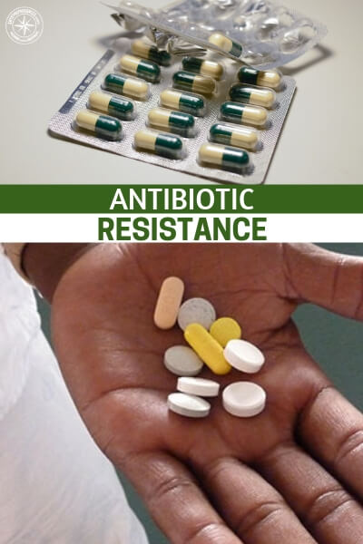 Antibiotic Resistance - This is a look at antibiotic resistance through the lens of an actual doctor. While it might be alluring to enjoy the confirmation bias of a homesteader about antibiotic resistance, we also need experts. While anyone can regurgitate facts about a topic only the experts conducting the tests will be able to tell us when a real problem has arisen.