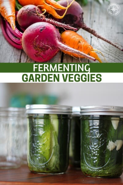 Fermenting Garden Veggies - This article offers up a method that is both beneficial to storage and your health! This article is about fermenting garden veggies which turns them into powerhouse foods for helping regularity and your gut health. Two areas that are very important when discussing overall health. These methods also require no canning process.