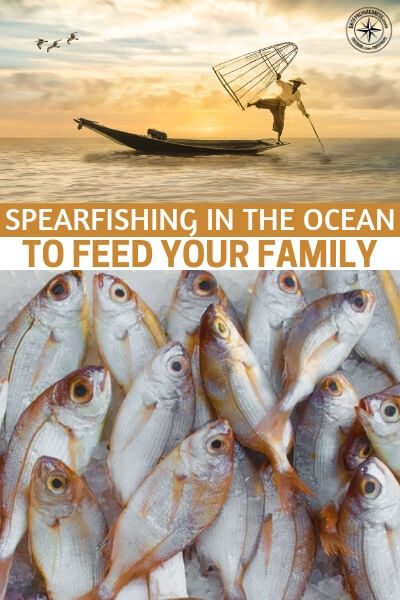 Spearfishing in the Ocean to Feed Your Family - If you are not very familiar with this type of situation you should look into spear fishing. It doesn't take a fancy rig like surf fishing and you don't need to concern yourself with things like bait and hooks. It is well worth the time and effort to read the article.