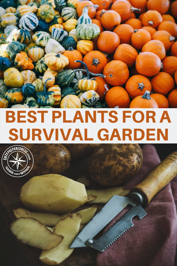 As you start to think about growing a survival garden, remember that foods are better than others. Some are easier to grow, some are easier to store, some provide better nutrition and some will provide more calories. Here's a list of the best plants for a survival garden.