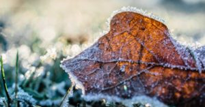 Survival Gardens: Bedding Down for Winter - This article is about a number of different things but it will make you consider how you handle the garden over the winter. To be the best gardener you can it helps to be intentional about all things.