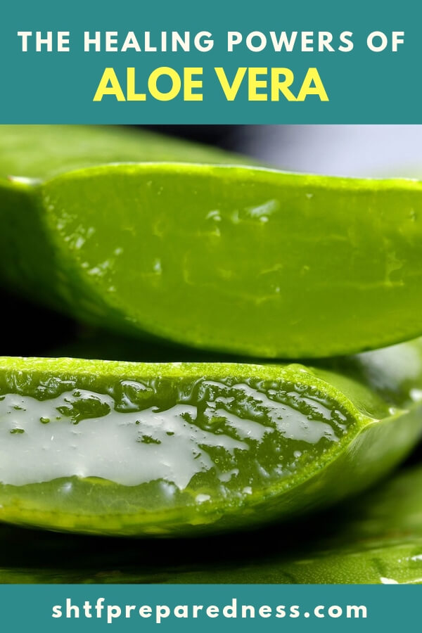 The Healing Powers of Aloe Vera - This article is about one such healing plant. Aloe Vera has gotten so incredibly popular over the last 5 years that you can even drink the stuff! There are some serious benefits that go along with this gooey little cactus like plant.