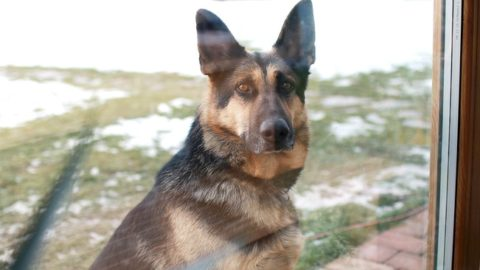 Top Dogs for Home Security