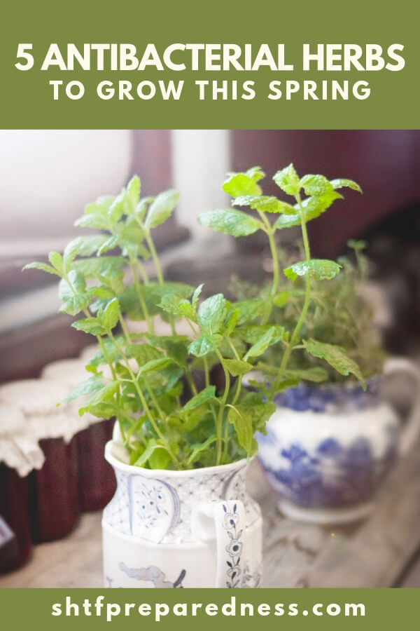 There are many different types of herbs and healing plants that you can both eat and use as medicine.