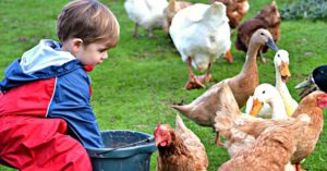 Children seem to have a natural predisposition to the ways of the homestead.