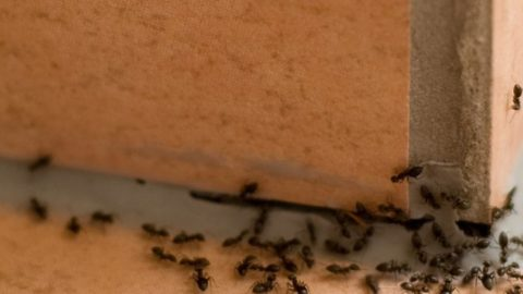 How to Get Rid of Ants Once and for All