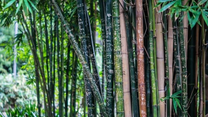 How To Use Bamboo For Survival