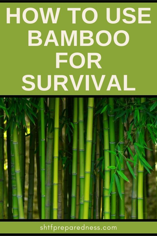 Learning how to use bamboo for survival could save your life. Learn a few ways to use this multipurpose plant: use it for fire, to cook, create shelter, and more. #bamboo #bambooforsurvival #shtf #survival #prepping #preparedness