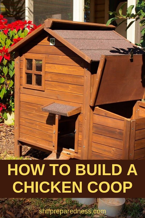 How to build a chicken coop to protect your flock. #chicken #homesteading #chickencoop #raisingchicken #survival #preparedness #shtf