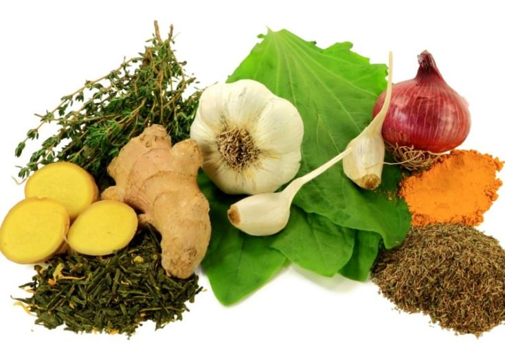 7 All Natural Antibiotics To Use In Emergencies
