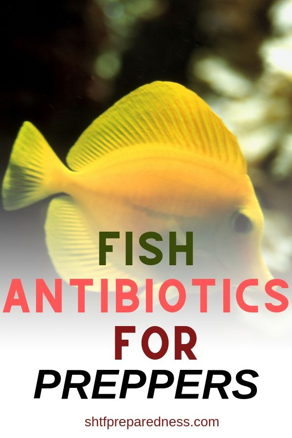 Fish antibiotics could save a loved one's life in a disaster situation, but read up on the subject so you know the dangers too. #shtf #preparedness #survival #antibiotics #fishantibiotics