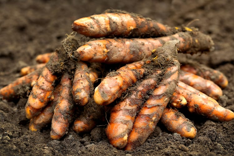 Turmeric has antibiotic properties as well as anti-inflammatory and pain relief properties.