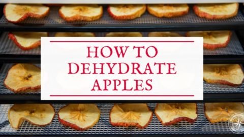 How to Dehydrate Apples (+ Our Cinnamon Apple Chips Recipe!)