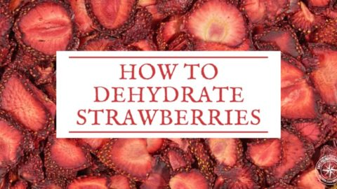 How to Dehydrate Strawberries (and Why)
