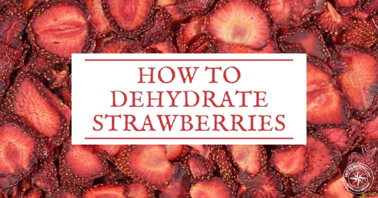 Learning how to dehydrate your own homegrown strawberries is fun and a great way to preserve fresh food. These can also be stored for the long term.