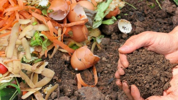 11 Must Use Organic Compost Ingredients
