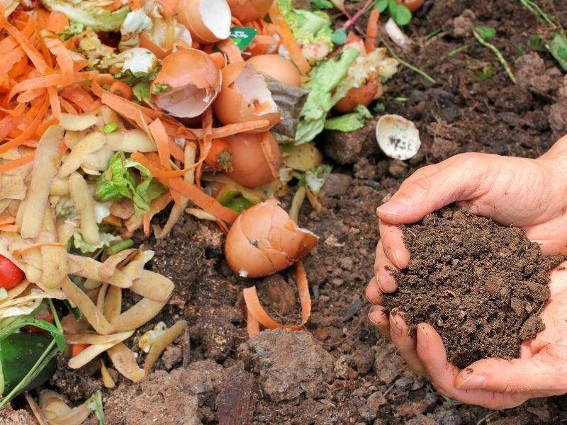 Hands holding some fresh compost next to a pile of kitchen scraps