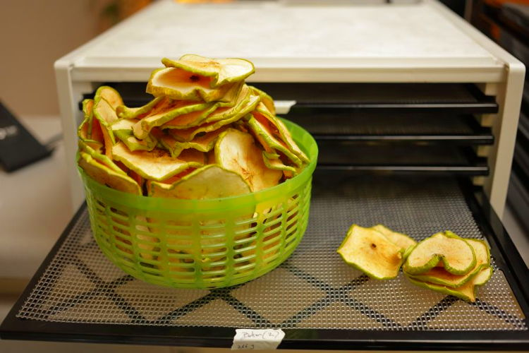 Using a dehydrator to dehydrate apple slices