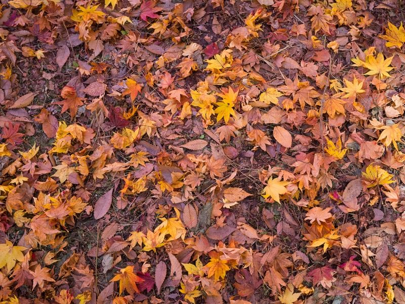 Leaves provide good nutrients for compost but they take a while to decompose.