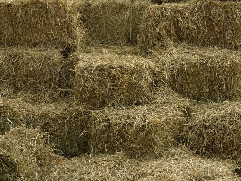 Hay is a great source of nutrients for your compost pile