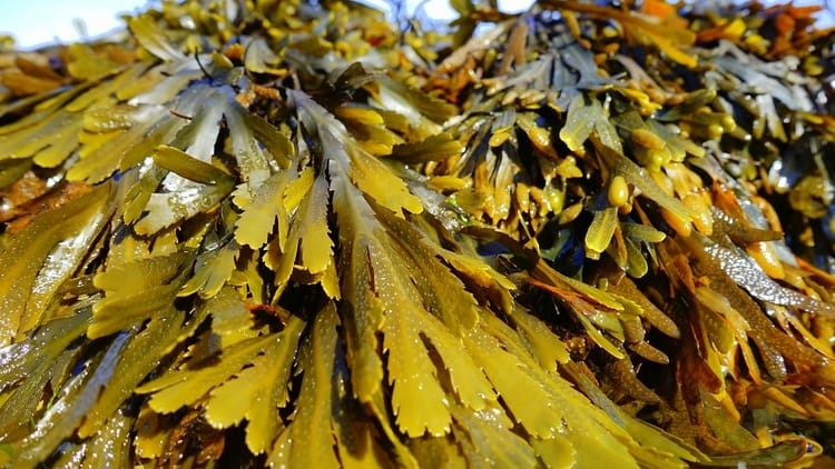 Seaweed is a great material for the compost because it decomposes easily and contains a ton of nutrients