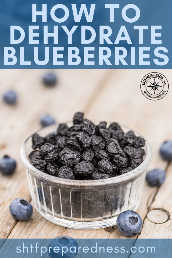 Knowing how to dehydrate blueberries provides you with a tasty snack, a long term food storage option, and the amazing health benefits of blueberries!