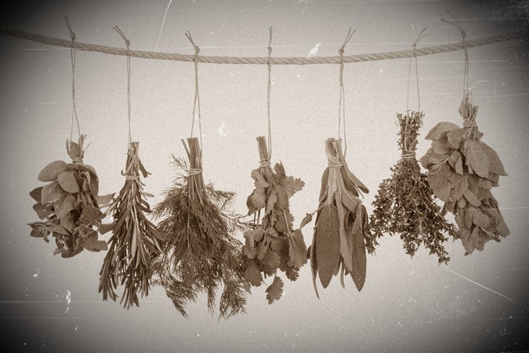 old photo of herbs hanging on a line to dehydrate