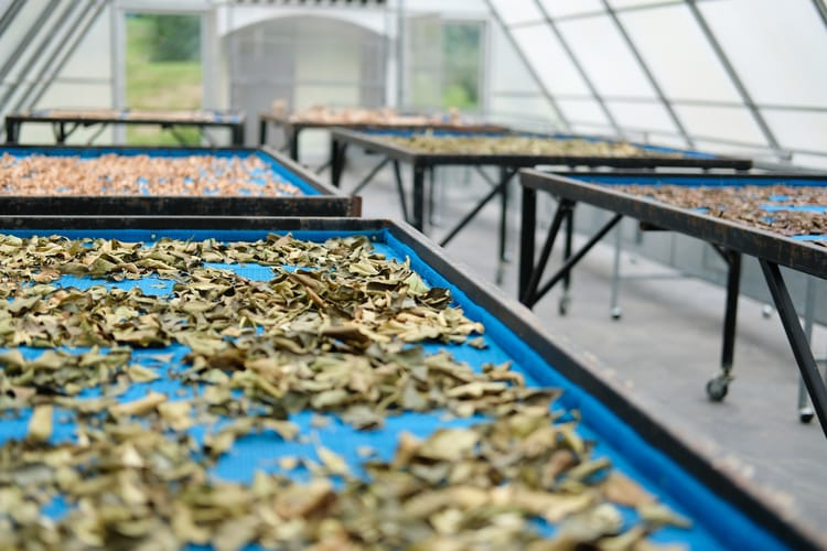 dehydrating food using the solar power of the sun