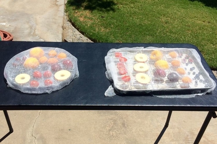 fruit trays set out in the sun to dehydrate